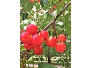 観光果樹園