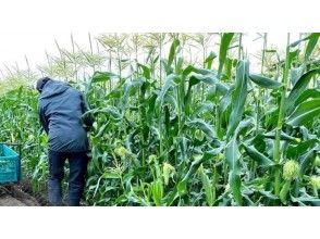 農業体験(約2時間)