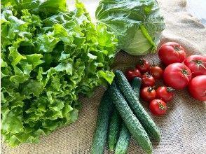 農業体験終了、お野菜のお土産をどうぞ!