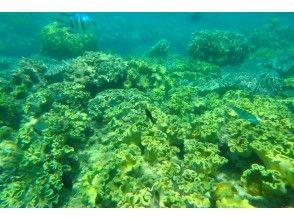 熱帶魚和珊瑚礁海