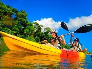 [Mangrove kayak tour]