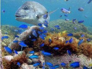 水深1mにたくさんの魚たち