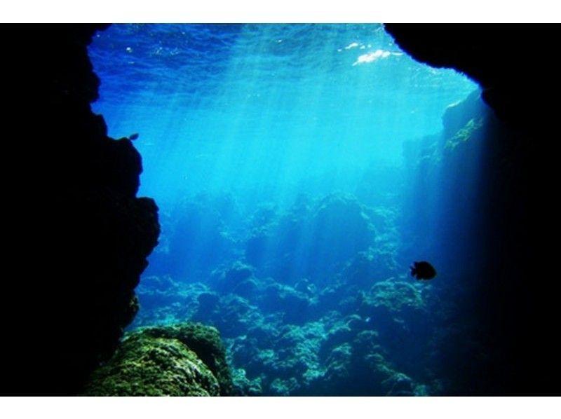 A日程 青の洞窟ダイビング+ホエール