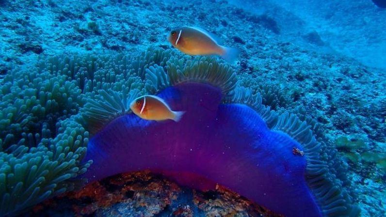 Okinawa Diving spot