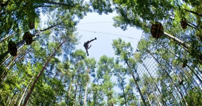 Forest adventure which adults and children can enjoy