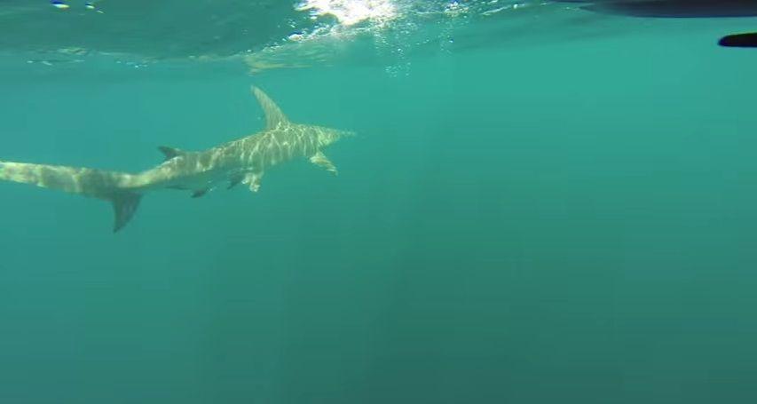 掛ったのは...サメ! スリル満点のカヤックフィッシング