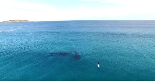 『SUP(スタンドアップパドル)』×2頭のクジラ