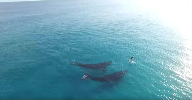 美しすぎる自然!『SUP(スタンドアップパドル)』×2頭のクジラ!!