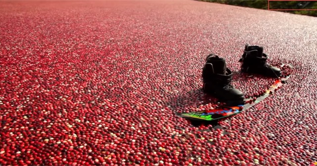 紅く染まるクランベリー畑で『Wakeboarding(ウェイクボード)』が美しい!!