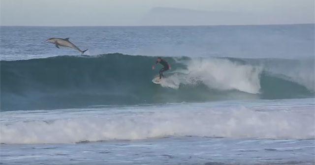 素敵すぎる光景!イルカと一緒にサーフィン『Surfing with Dolphins』!!