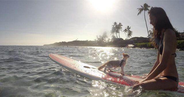 ハワイの地名『Nanakuli(ナナクリ)』と名付けられたサーフキャットがInstagramで話題!!