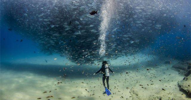 フォトグラファー「Jeff Hester」が写したメキシコでの圧巻の海中。