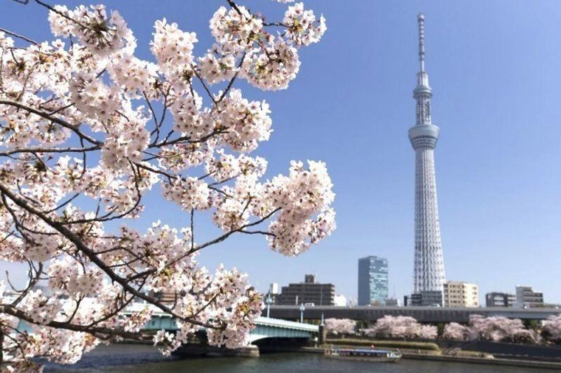 桜が見られる隅田川お花見クルーズ