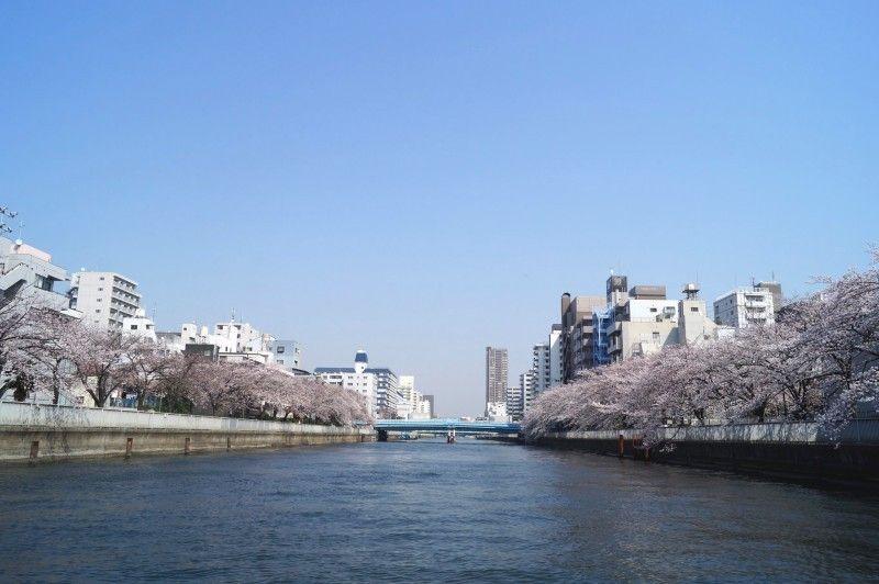 隅田川お花見クルーズは期間限定開催中
