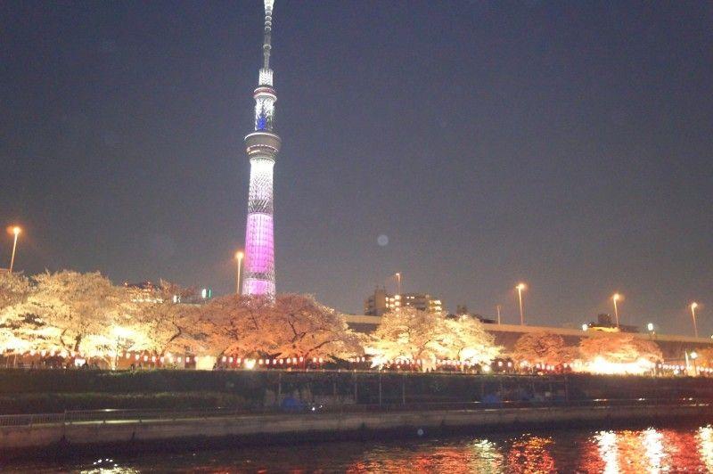 お花見クルーズなら桜の見ごろな隅田川