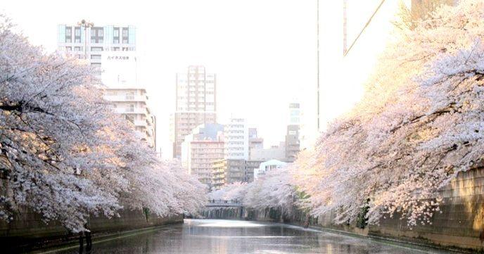 目黒川お花見CHANDONクルーズ