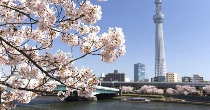 隅田川お花見CHANDONクルーズ