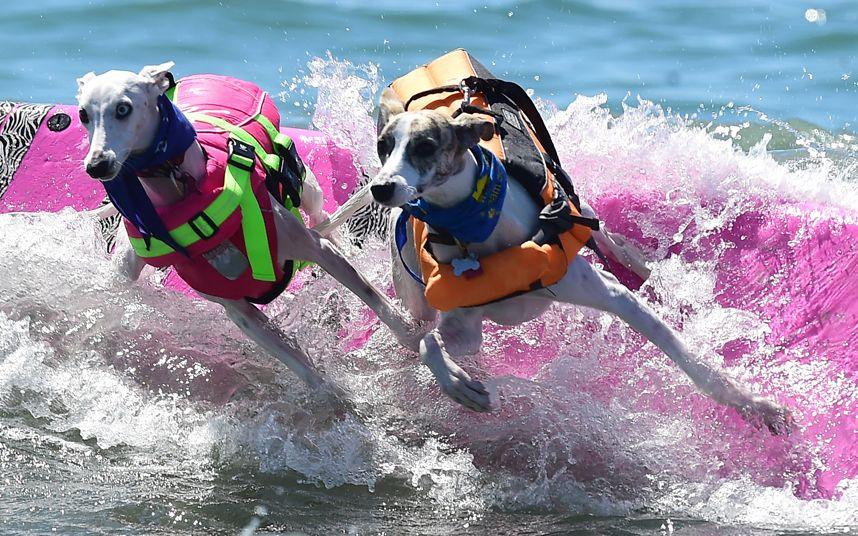DOG SURFING(ドッグサーフィン)