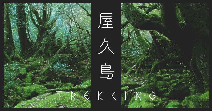 屋久島を満喫できるおすすめトレッキングツアー