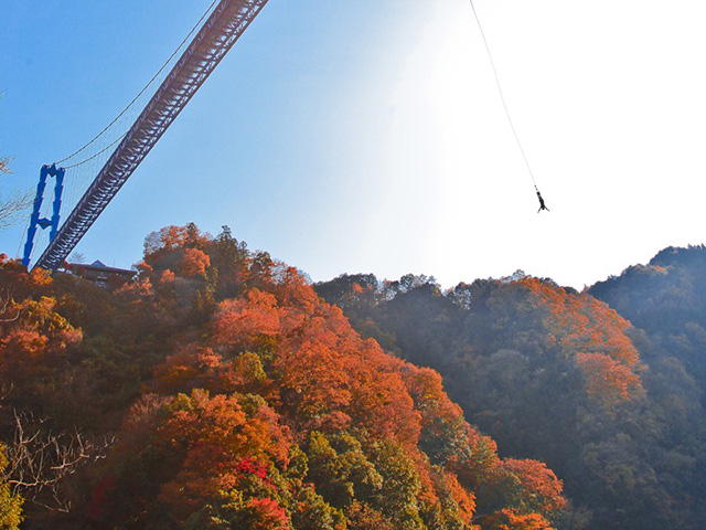 Bungee Experience Autumn