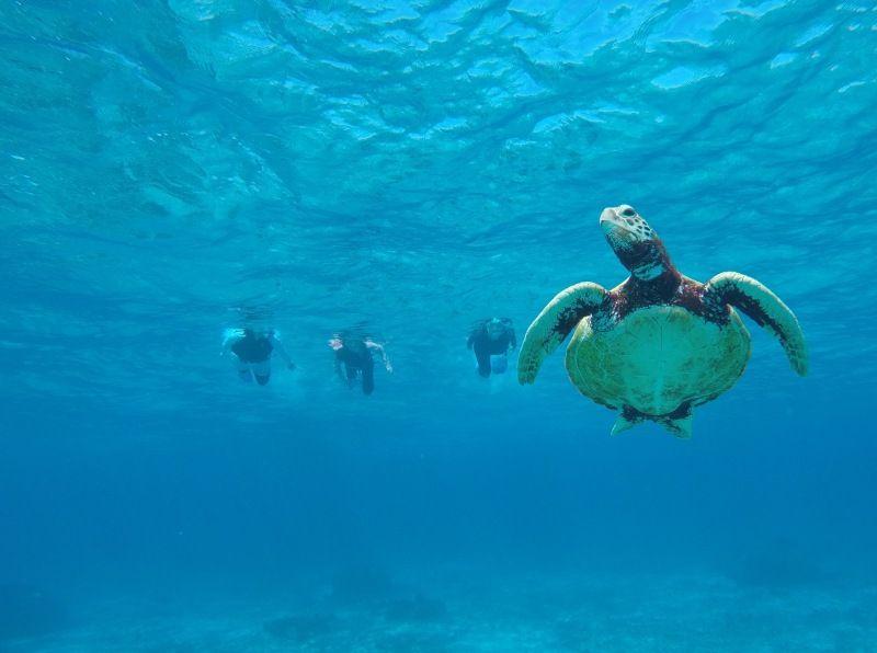 ดำน้ำดูปะการังที่เป็นที่นิยม
