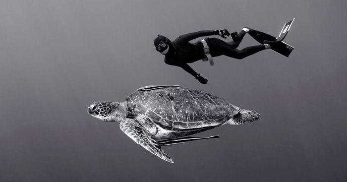自由潛水浮潛