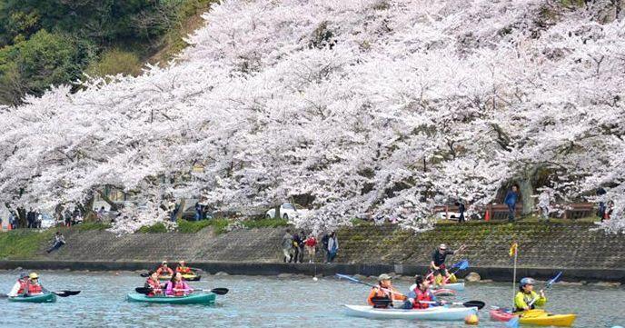 琵琶湖 花見