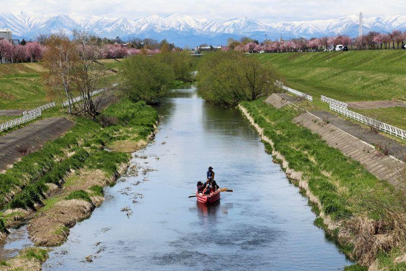 Obihiro River Cherry-bloss