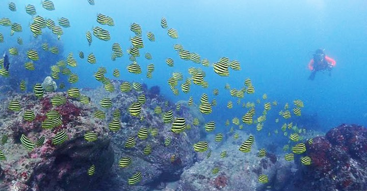 2017_ajpush_hayama_diving