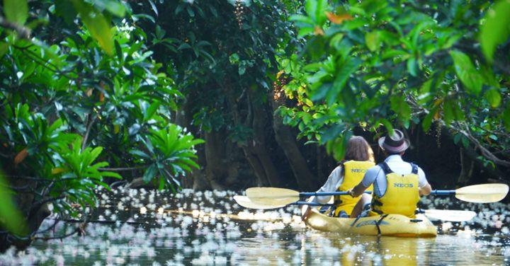 Iriomote-jima Uraya River Tourism