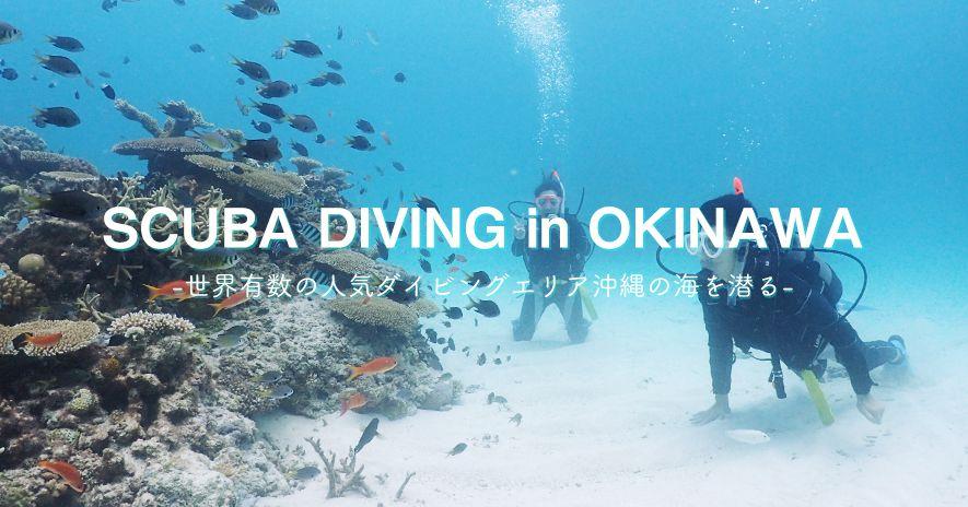 2018 โอกินาว่าประสบการณ์การดำน้ำรุ่นที่ชัดเจน! ให้ Moguro หนึ่งในจุดที่สวยงามที่สุดในโลก!