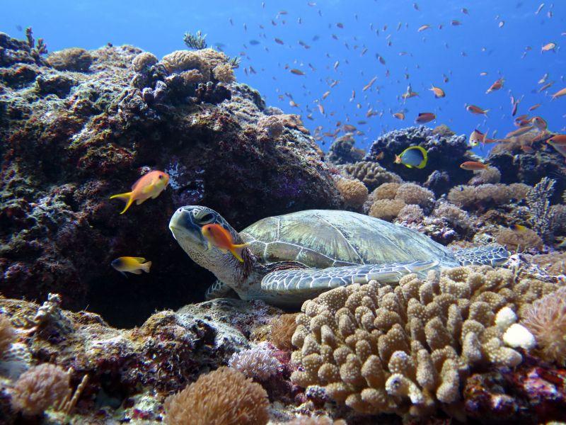 宮古島のダイビングでウミガメが観られる