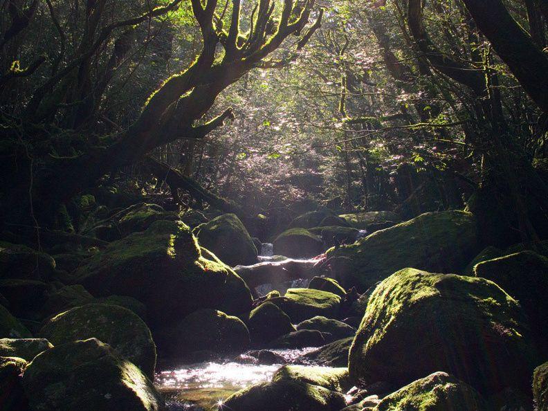 Yakushima Shiratani Cloud Water Gorge