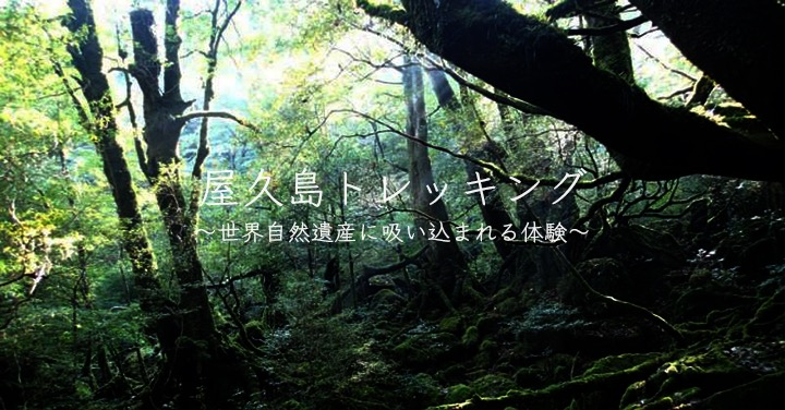 屋久島トレッキング〜世界遺産に吸い込まれる体験〜