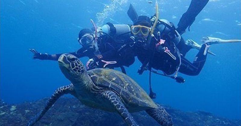 【東京・八丈島おすすめ】アオウミガメ遭遇率98%超!シュノーケリングやダイビングプランが人気「ダイビングショップ アラベスク」