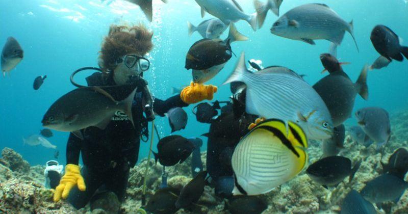 【沖縄本島おすすめ】青の洞窟体験ダイビングやマーメイドスイム体験が人気!「沖縄ダイビングショップシーモール」