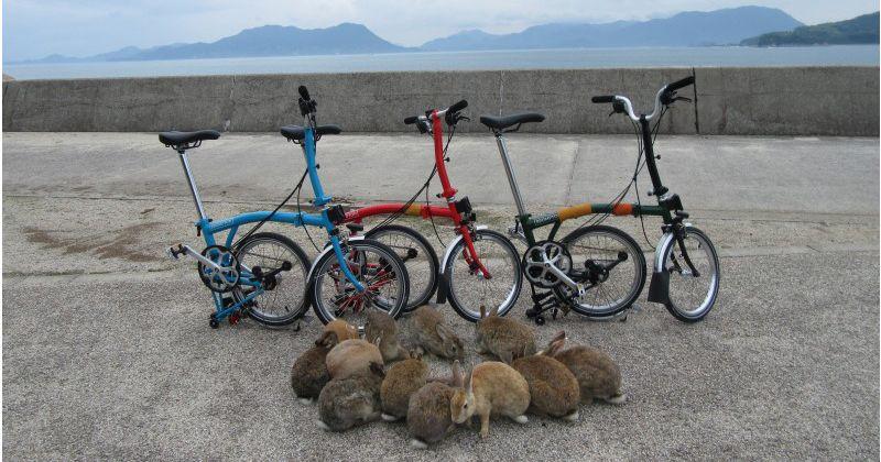 """【広島・大久野島】世界から注目される""""ラビットアイランド(ウサギの島)""""を自転車で散策「ポタリング」体験プラン!《予約受付中》"""