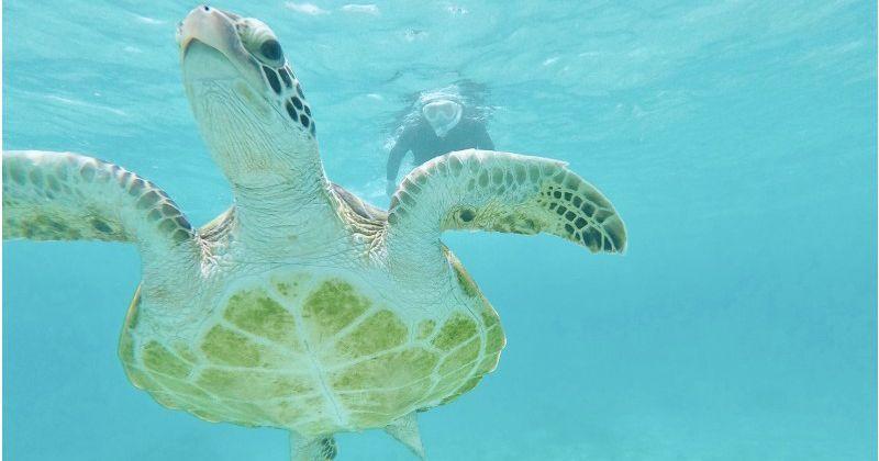 【宮古島おすすめショップ】ウミガメと泳ぐシュノーケリングやサンセットカヤック体験が人気「サマーリゾート宮古島」