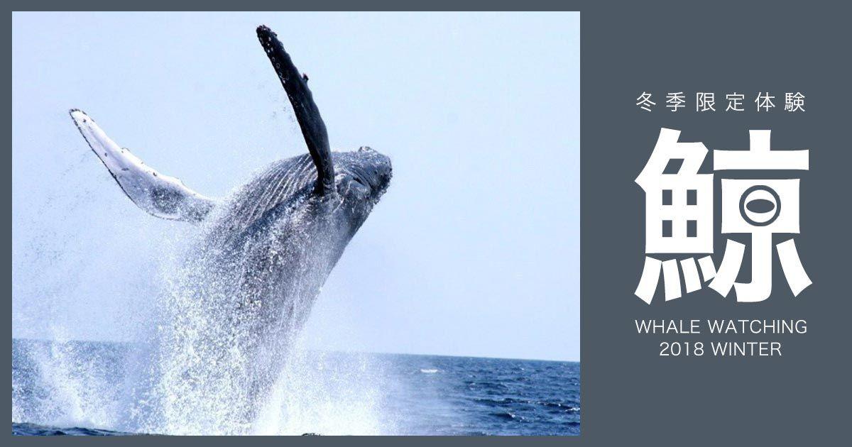 【沖縄ホエールウォッチング 2018】遭遇率高ツアーに参加!那覇発・北部発でクジラに会いに行くオススメプラン乗船予約受付!