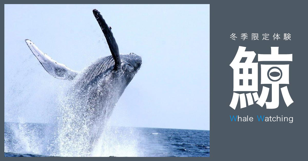 """""""[Okinawa Whale watching] Latest in 2020! Recommended Tour Ranking in Winter"""""""