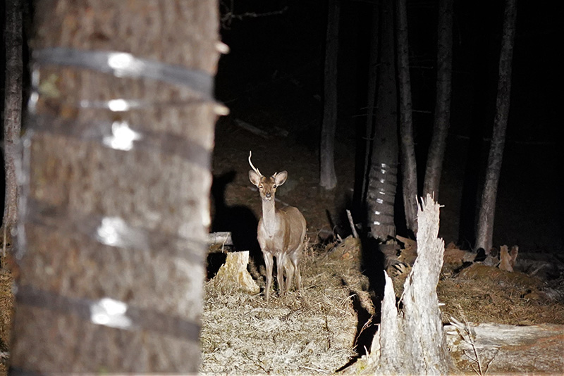 [Tochigi / Oku-Nikko Popular Shop] Held in November 2021! Go by a special bus at night! Animal & Star Watching Night Tour!