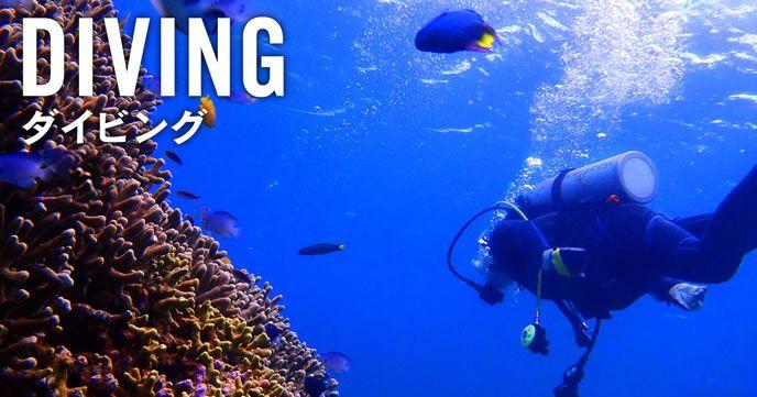 伊豆諸島におけるダイビングスポット、特徴、そして予算について
