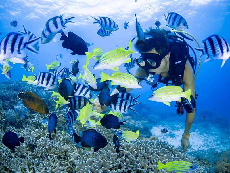 沖縄のダイビングスポットをエリア別に紹介! 慶良間、青の洞窟、石垣島、宮古島など