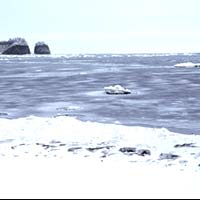 流氷ウォーク/氷上ウォーク