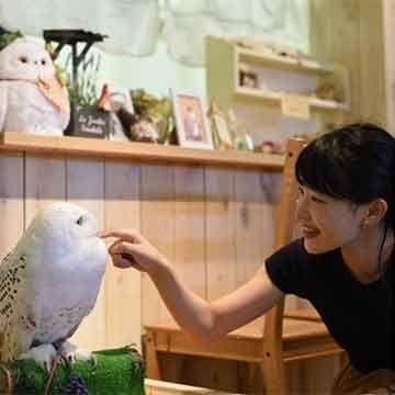 Animal Café