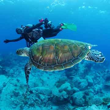 Diving Certification Courses