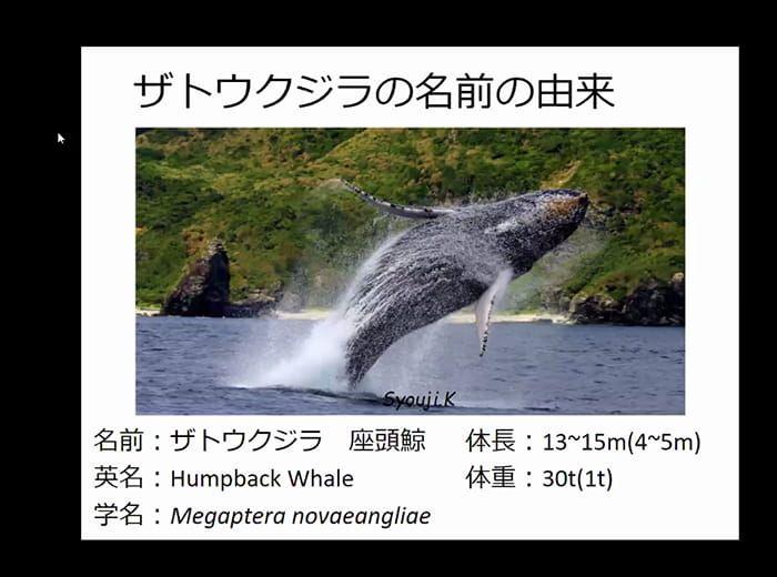 クジラについてクイズを交えながら楽しく学ぶ