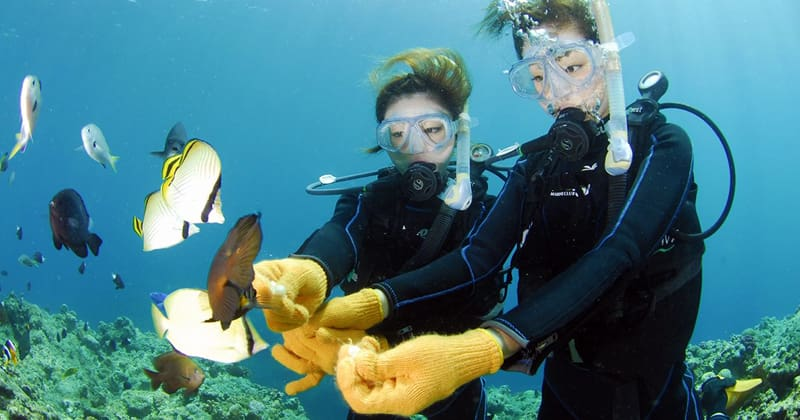 Basic guide to first-time Diving experience, experiential Diving that even beginners can enjoy