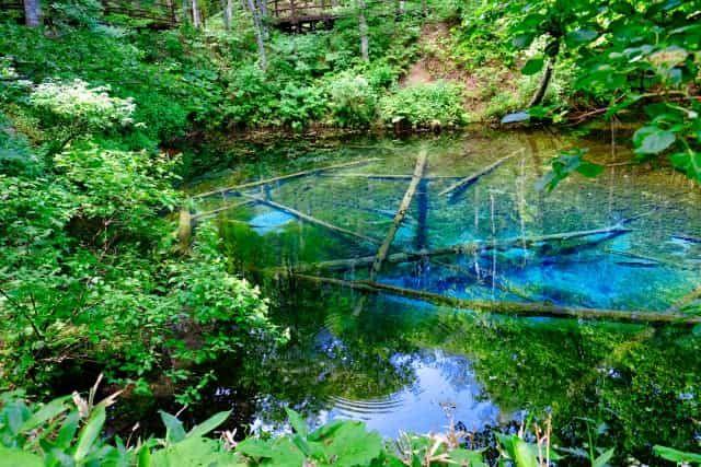 知床・おすすめ観光スポット:神の子池