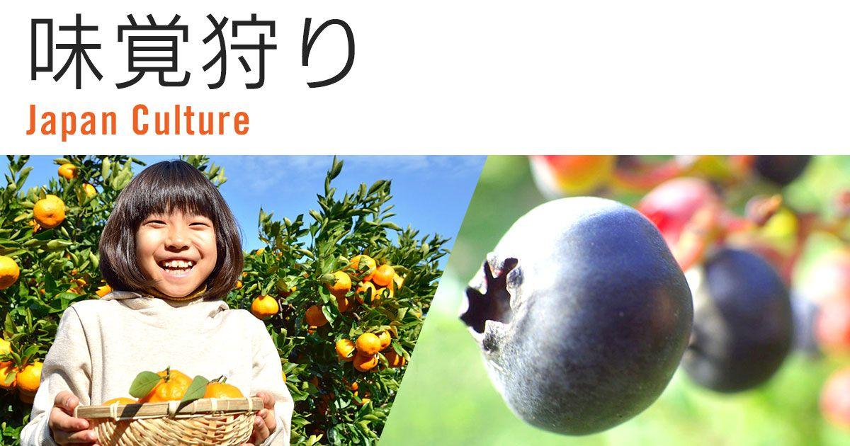 九州・沖縄地方で秋の味覚りんご狩りを楽しもう